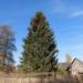 Рождественская елка прибудет в Тарту из Вырумаа уже 16 ноября